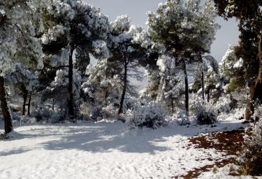 Exteriores nevados