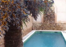 Árbol y piscina de la casa rural ciudadrealeña