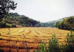 Zona de campos en el entorno