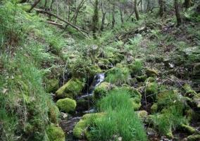Zonas verdes con paso de aguas