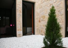 Vistas de las zonas exteriores con un pino