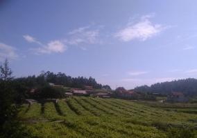 Zona con plantas y paisajes