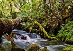 Zonas naturales con cascadas