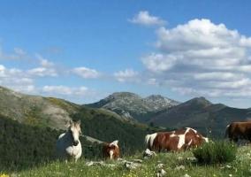 Zonas naturales con pastos