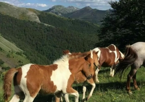 Zonas naturales con ponis