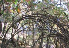 Zonas verdes con bosques