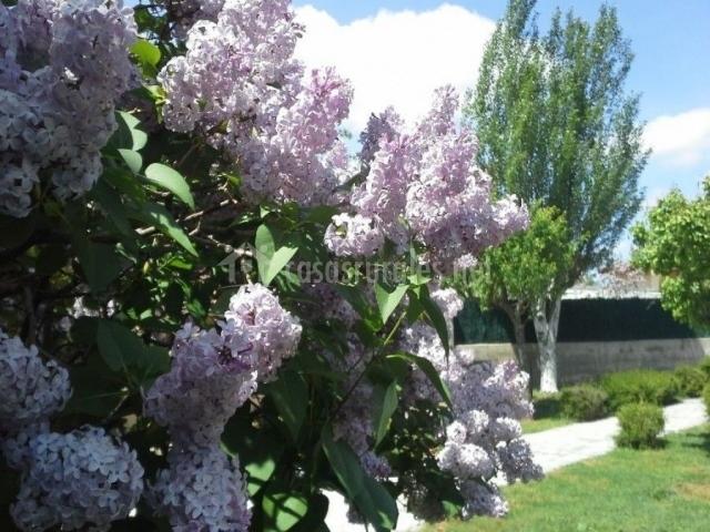 Flores de los árboles del jardín