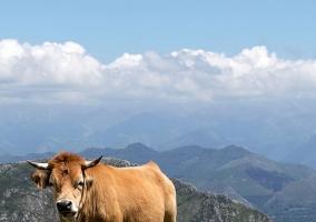 Zona de paisajes asturianos