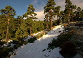 Cercedilla y sus paisajes