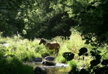 Zonas naturales con caballos