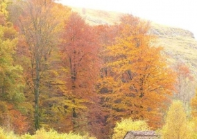 Zonas naturales con colores naranjas
