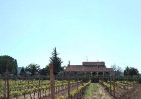 Acceso a la casa con viñedos