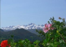 Zona natural con picos nevados al fondo