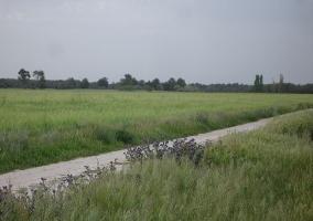 Campos de La Moraña