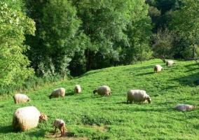 Zona de prados verdes