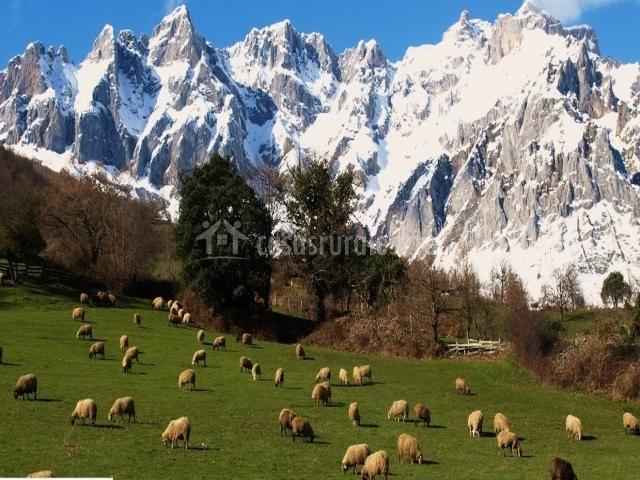 Muy cerca encontrarás este paisaje ofrecido por los Picos de Europa