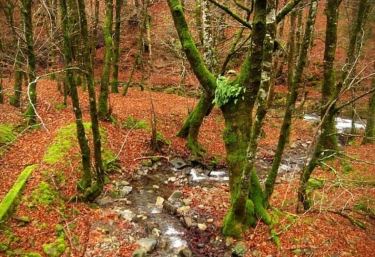 Zonas naturales en el entorno con paisajes