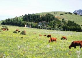 Bungalows y Cabañas Tarifa