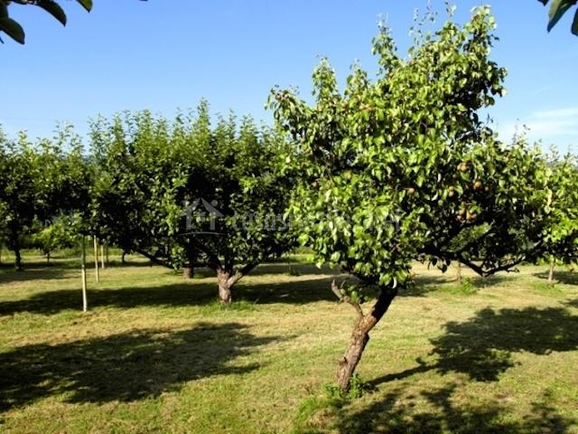 sillas jardín con sillas y porche jardín con árboles frutales