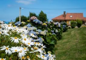 Flores en el exterior