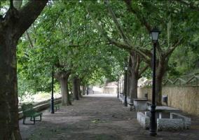 Camino con bancos y árboles