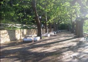 Mesas y árboles