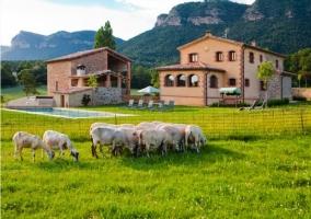 Casa rural catalana rodeada por ovejas