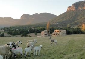 Ovejas y vista de la casa rural al fondo