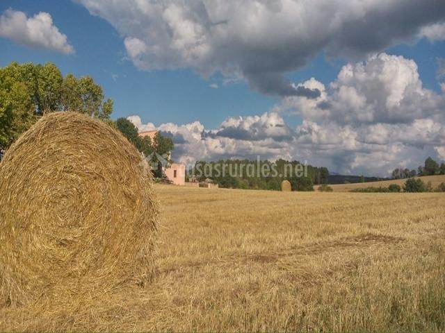 Exterior de la casa rodeada de cultivos