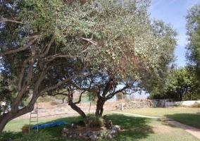 Zona de olivos