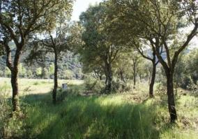 Bosques de la finca