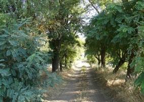 Vistas de la zona de árboles