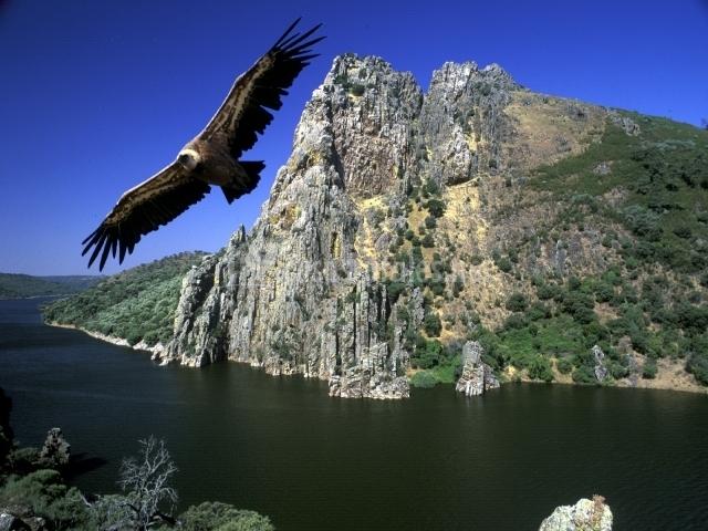 Aves rapaces sobrevolando Monfragüe