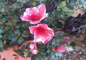 Flores del jardín