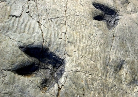 Huellas fosilizadas