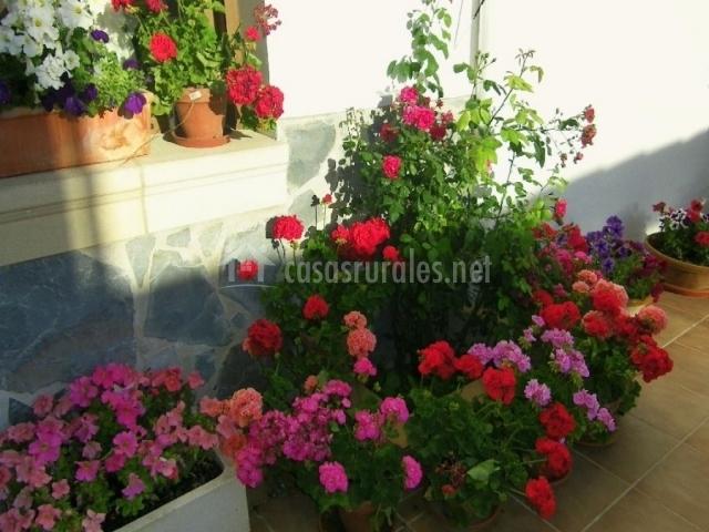 Plantas con flores en el patio de la entrada