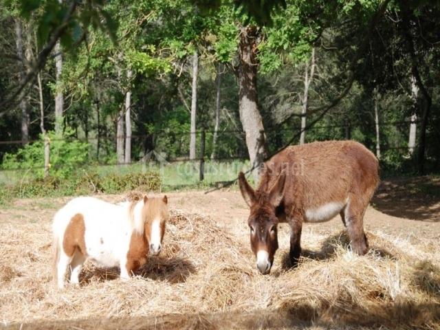 Granja con animales