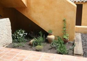Plantas en el patio