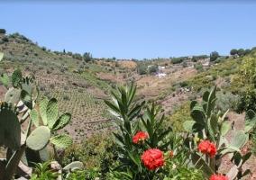 Zona natural del entorno con flores de la zona