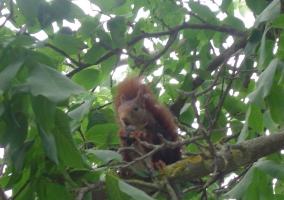 Ardillas en nuestros árboles