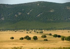 Otra vista del Parque Nacional de Cabañeros