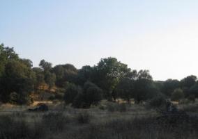 Zonas naturales de Brunete