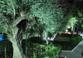 Paseo nocturno por los jardines