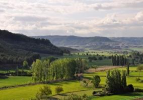 Verdes campos en los alrededores