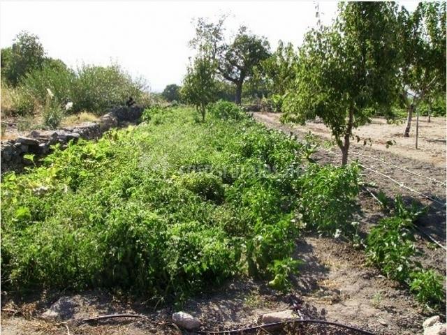 Zona del huerto con árboles