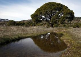 Hoyo de Pinares en el Valle de alberche