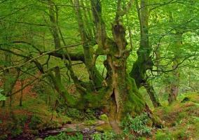Zona de bosques verdes