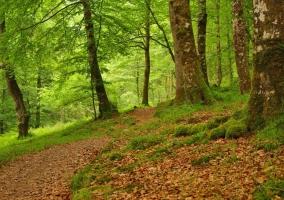 Zona de bosques