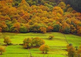 Zona de prados en el entorno