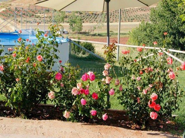 Rosales en la piscina